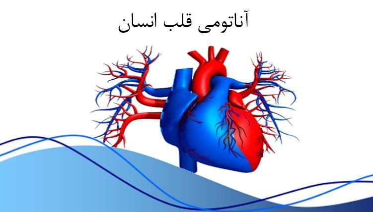 پاورپوینت آناتومی قلب انسان